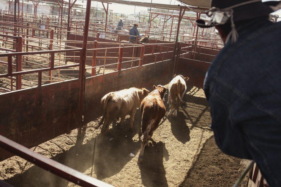 Vaqueros en Sonora